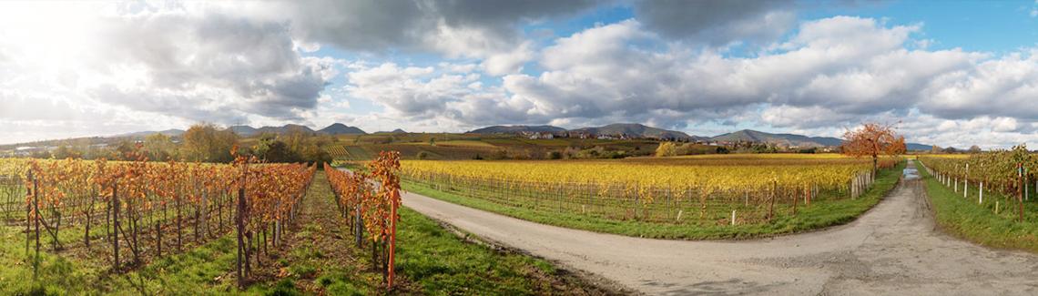 Anfahrt ins Weingut Vinopan