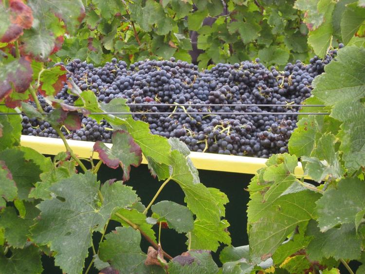 Kleine Weinprobe mit Pfälzer Schmanker Sonderaktionl