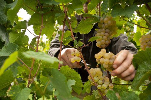 Kleine Weinprobe mit Pfälzer Schmankerl Sonderaktion